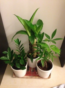 plants i bought for our home :)